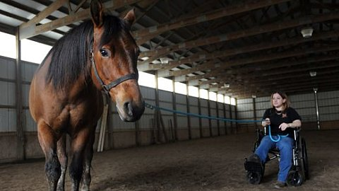 Injury won't stop woman's crusade to rescue horses